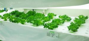 植物工場画像2