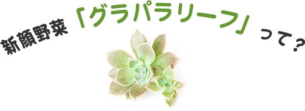 新顔野菜「グラパラリーフ」って?